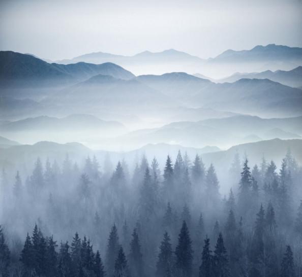 Фотообои Туманный лес в синем оттенке