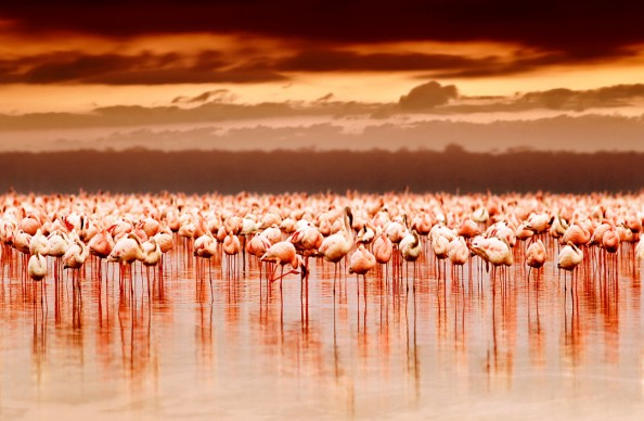 Фотообои Розовые фламинго на фоне заката