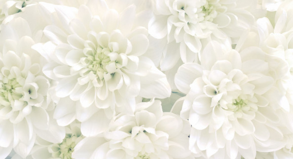 Фотообои белые бутоны