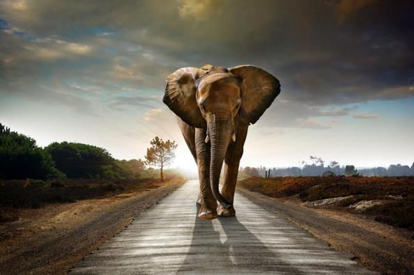 Фотообои Слон на фоне заката