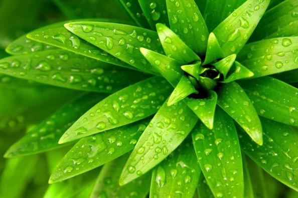 Фотообои Зеленые листья с каплями