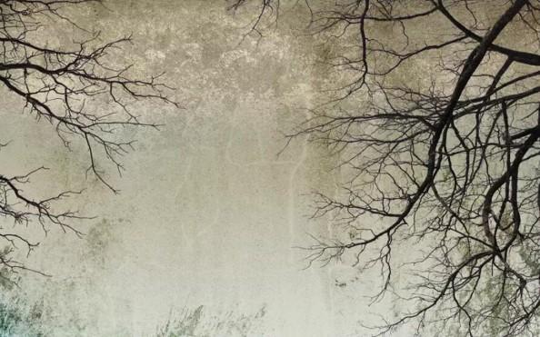Фотообои Ветки деревьев