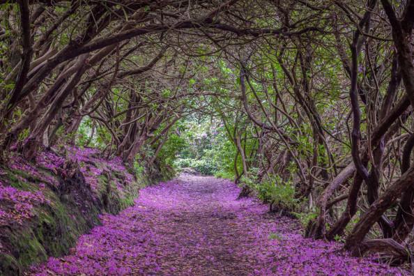 Фотообои Арка из цветов